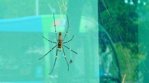 Spider Tropical North Queensland Australia wildlife