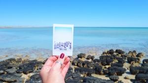 Polaroid picture Hamelin Pool Stromatolites Shark Bay WA